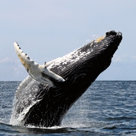 See a whale - Bucket List Ideas