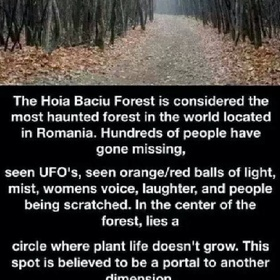 Check out the hoia baciu forest in Romania - Bucket List Ideas