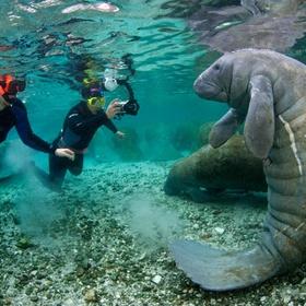 Swim/ snorkel with manatees - Bucket List Ideas