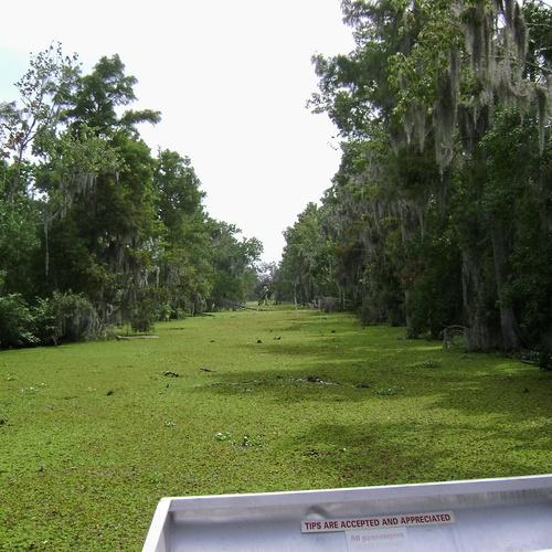 Air boat across an alligator infested swamp - Bucket List Ideas