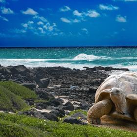 Go to the Galapagos Islands - Bucket List Ideas