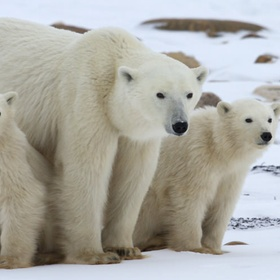 Polar Bear Swim - Bucket List Ideas