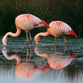 Ride the Flamingo Route - Bucket List Ideas