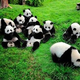 Visit Chengdu Research Base, China - Bucket List Ideas