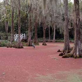 Visit South Carolina - Bucket List Ideas
