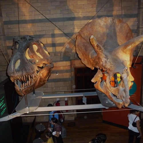 Natural History Museum in London - Bucket List Ideas