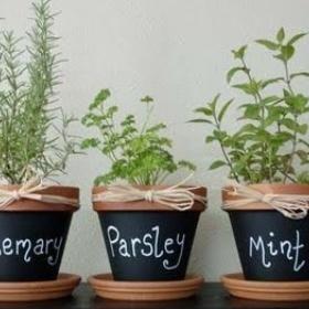 Grow a Herb Garden - Bucket List Ideas