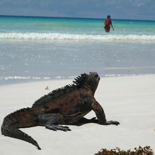 Visit the Galapagos Islands - Bucket List Ideas