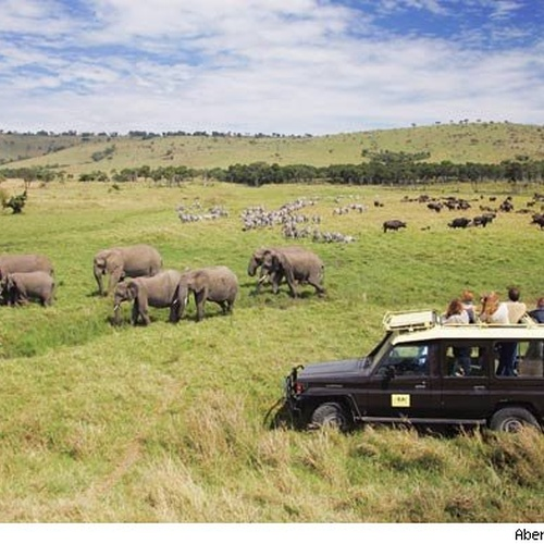 Go on a African Safari - Bucket List Ideas