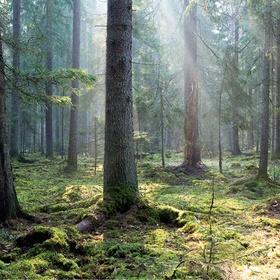 Visit Białowieża Forest, Belorussia - Bucket List Ideas