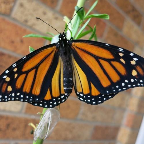Grow caterpillars into butterflies - Bucket List Ideas