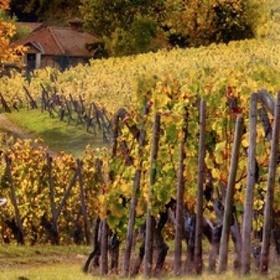 Go on a Horseback Wine Tour - Bucket List Ideas