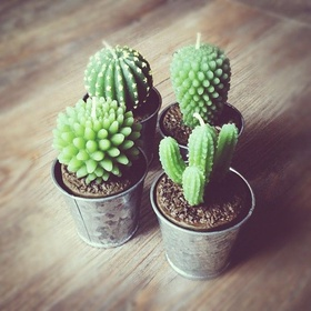 Grow Cacti - Bucket List Ideas