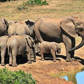 Visit Kruger National Park - Bucket List Ideas