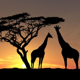 Visit Africa (CapeTown) - Bucket List Ideas
