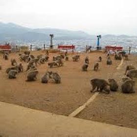 Visit jigokudani monkey park - Bucket List Ideas