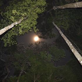 Amazon Rainforest - Spending the night tour - Bucket List Ideas