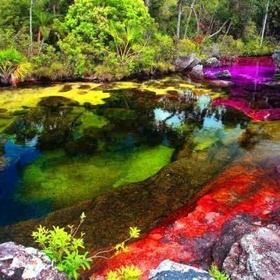 Stroll by The River of Five Colours: Cano Cristales in Colombia - Bucket List Ideas