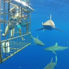 Swim with the sharks in Fiji - Bucket List Ideas