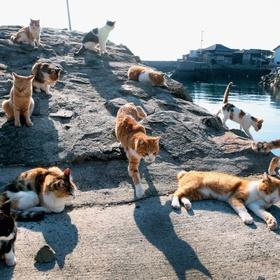 Visit Cat Island in Japan - Bucket List Ideas