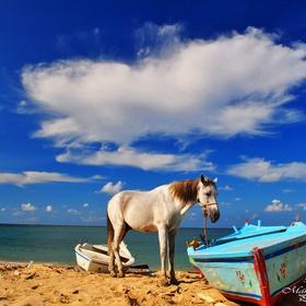 Ride a horse through water/along a beach - Bucket List Ideas