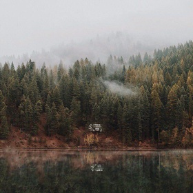 Being inside a pine forest - Bucket List Ideas
