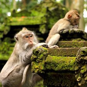 See the monkeys in bali - Bucket List Ideas