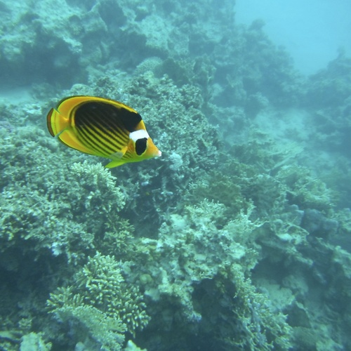 Snorkel in the Red Sea - Bucket List Ideas
