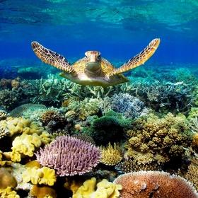 Swim the great barrier reef - Bucket List Ideas