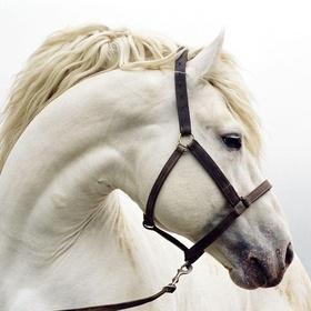 Riding a white horse - Bucket List Ideas