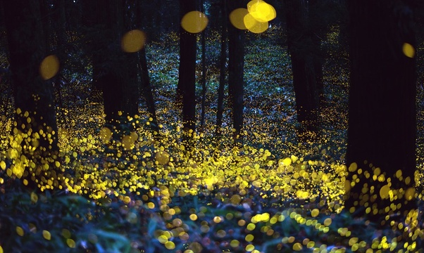 See fireflies - Bucket List Ideas