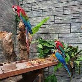 Tirar foto com pássaros no Ecopark Sol e Mar - Bucket List Ideas