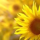 =Diana :)'s avatar image