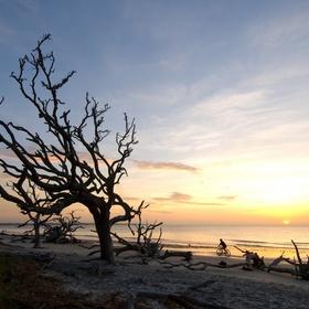 Visit Driftwood Beach in Georgia - Bucket List Ideas