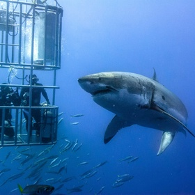 Go shark cage diving - Bucket List Ideas