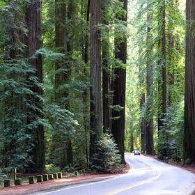 Walk the Humbold Redwoods State Park Trail - Bucket List Ideas