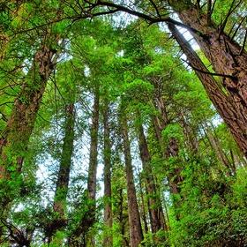 Be Overwhelmed By Redwoods - Bucket List Ideas