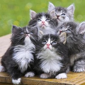 Get a cat - Bucket List Ideas