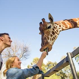 Feed giraffes - Bucket List Ideas
