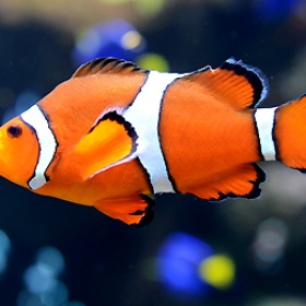 Buy a clown fish and name it Nemo - Bucket List Ideas