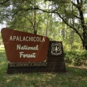 Visit Apalachicola National Forest - Bucket List Ideas