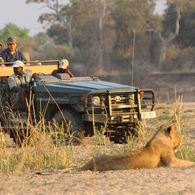 Faire un safari en afrique - Bucket List Ideas