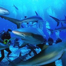 Go on a shark dive - Bucket List Ideas