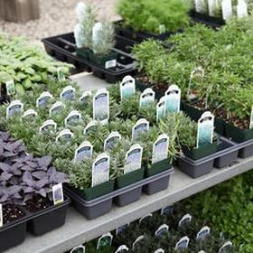 Grow my own herb garden - Bucket List Ideas