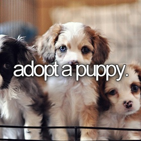 Rescue a dog/cat from animal shelter - Bucket List Ideas