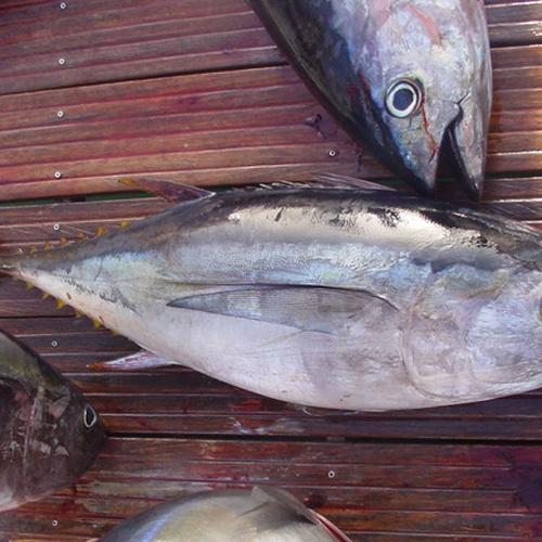 Catch a fish - Bucket List Ideas