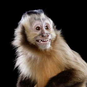 Get a Pet Monkey and Take Great Care of It - Bucket List Ideas
