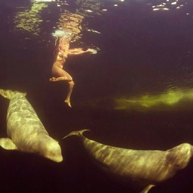 Swim with belugas - Bucket List Ideas