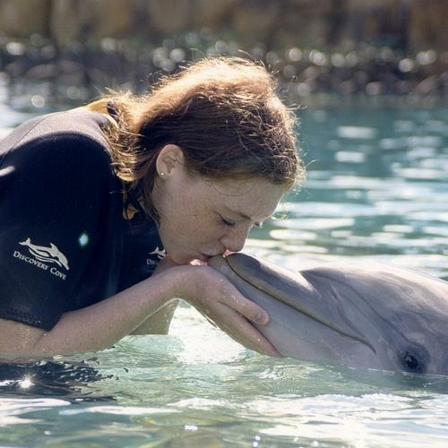 Swim with Dolphins - Bucket List Ideas