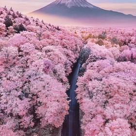Visit Japan during Cherry Blossom Season - Bucket List Ideas